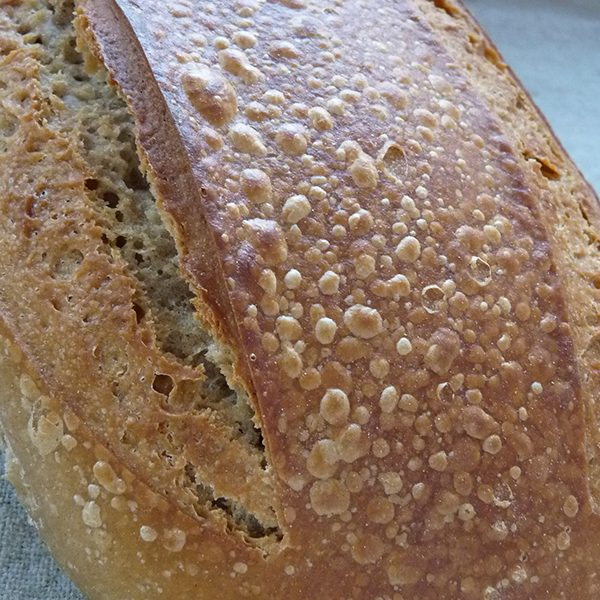 batard-grand-epeautre